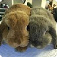 Adopt A Pet :: Mochi - Paramount, CA