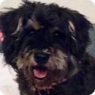 Adopt A Pet :: Yogie