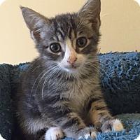 Adopt A Pet :: Maya - Smyrna, GA