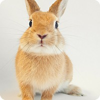 Adopt A Pet :: Julius - Los Angeles, CA