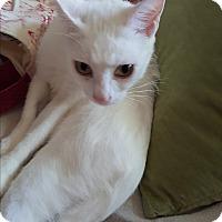 Adopt A Pet :: Itsy - Homewood, AL