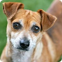 Adopt A Pet :: Ralph - Coronado, CA