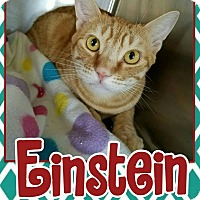 Adopt A Pet :: Einstein - Edwards AFB, CA
