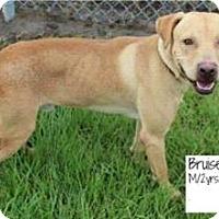 Adopt A Pet :: Bruiser - Covington, LA