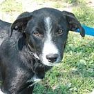 Adopt A Pet :: Mardi