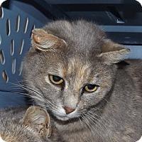 Adopt A Pet :: Aretha Franklin - Orleans, VT