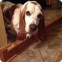 Adopt A Pet :: Gordy - Aurora, IL
