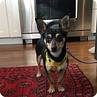 Adopt A Pet :: Yuri - Indianapolis, IN