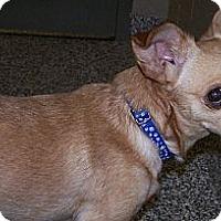 Adopt A Pet :: Jax - Jackson, MI