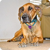 Adopt A Pet :: Layla-Adoption Pending - Phoenix, AZ