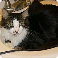 Adopt A Pet :: Camden - Brea, CA