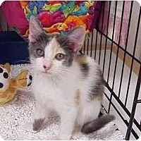 Adopt A Pet :: T.C. - Deerfield Beach, FL