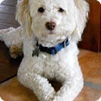 Adopt A Pet :: Joby - La Costa, CA