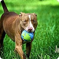 Adopt A Pet :: Johnny - Albany, NY