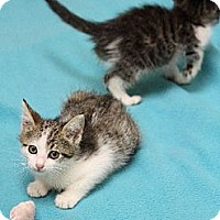 Adopt A Pet :: Diesel & Octane - Chicago, IL