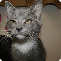 Adopt A Pet :: Daryl - Trevose, PA