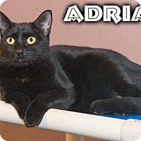 Adopt A Pet :: Adrian - River Edge, NJ