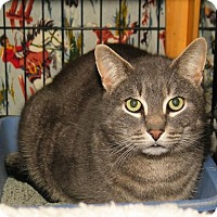 Adopt A Pet :: Gerrard - Milford, MA