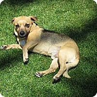Adopt A Pet :: Marvin - Scottsdale, AZ