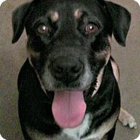 Adopt A Pet :: Jackie - Courtesy Posting - St Petersburg, FL