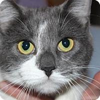 Adopt A Pet :: Celeste - Hamilton, ON