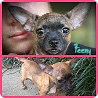 Adopt A Pet :: Tiny & Teeny - Daleville, AL
