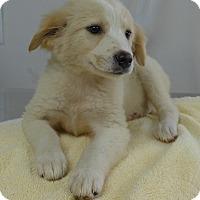 Adopt A Pet :: Tay - Manning, SC