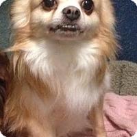 Adopt A Pet :: Harley - Cashiers, NC