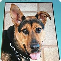 Adopt A Pet :: STORMY VON STORM - Los Angeles, CA