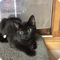 Adopt A Pet :: A. White Tip - Rochester, MI