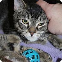 Adopt A Pet :: Ticky - Burlington, WA