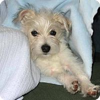 Adopt A Pet :: Charlie - Van Nuys, CA