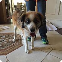Adopt A Pet :: Lorelai - Roswell, GA