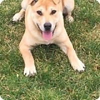 Adopt A Pet :: Osita - Bellingham, WA