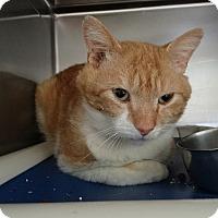 Adopt A Pet :: Freckles - Elyria, OH