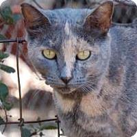 Adopt A Pet :: CC - El Dorado Hills, CA