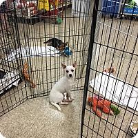 Adopt A Pet :: Casper - Hohenwald, TN
