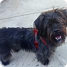 Adopt A Pet :: Spike