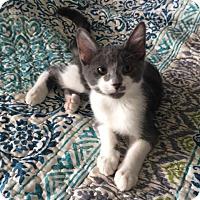 Adopt A Pet :: Blazer - Columbus, OH
