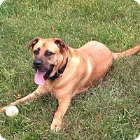 Adopt A Pet :: Bane - Staten Island, NY