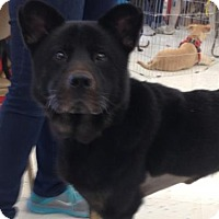 Adopt A Pet :: Cubby Bear - Hillside, IL