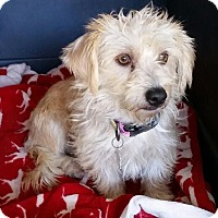 Adopt A Pet :: Prudence - Encinitas, CA