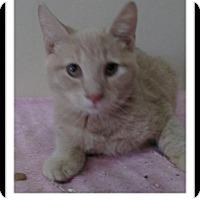 Adopt A Pet :: Downey - Trevose, PA