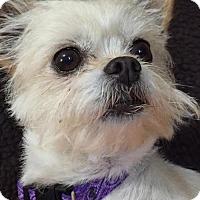 Adopt A Pet :: Daisy Mae - Great Bend, KS