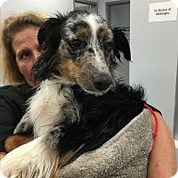 Adopt A Pet :: Hercules - Parker, KS