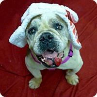 Adopt A Pet :: Wilma - Santa Ana, CA