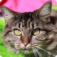 Adopt A Pet :: Butterscotch - INDOOR / OUTDOOR - Cookeville, TN
