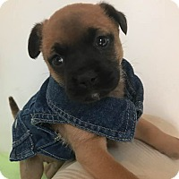 Adopt A Pet :: Wynonna - Gallatin, TN