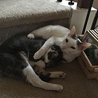 Adopt A Pet :: Diana - Dallas, TX