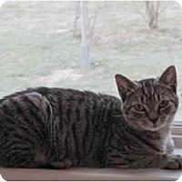 Adopt A Pet :: MIni-b - Colmar, PA